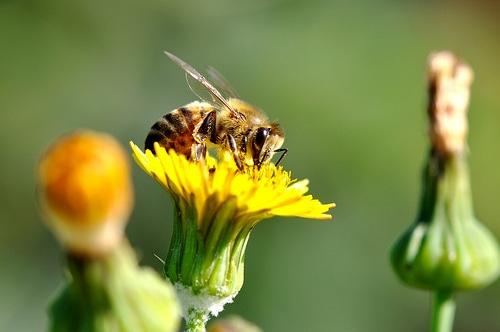 Pesticidi killer delle api nelle piante ornamentali.